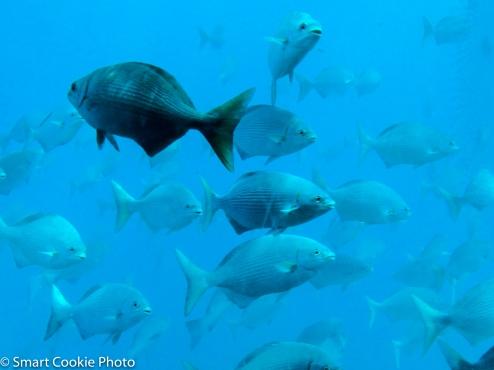 Great Barrier Reef, Au (2013)
